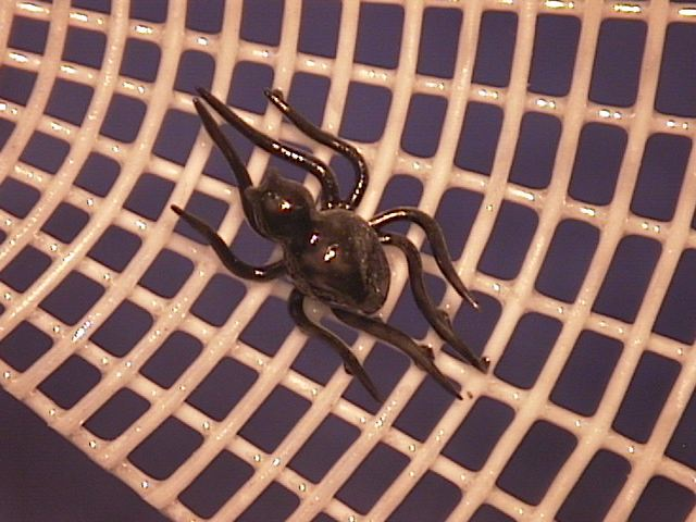 A Marvelous Spider !!